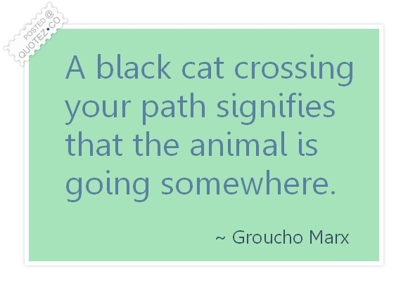 Black Cat Crossing Your Path Funny Quote Quotez Co