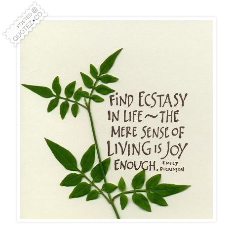 Find Ecstasy In Life Quote
