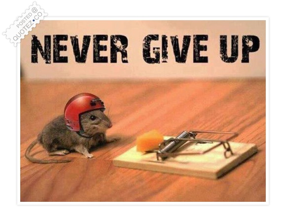 funny-never-give-up - Never Give Up - Jokes and Humor